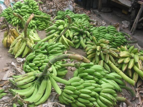 hali kama hii mazao ya Zanzibar kweli yanaweza kupata soko katika nchi za ualaya?